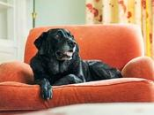 Easy Ways Make Your Dog's Life More Comfortable