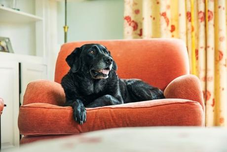 4 Easy Ways To Make Your Dog's Life More Comfortable