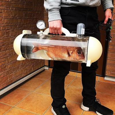 Aquarium - 'Katsugyo' bags .. .. portable tanks for live fish carriage !!
