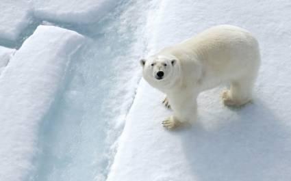 Enchanting Travels Arctic Tours