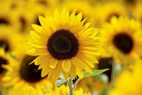 Top 5 Flowers That Might Cause Allergies and Migraines in the Office