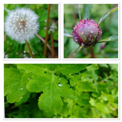 The Great Blackberry Garden Treasure Hunt - Discoveries Day 9