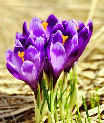 For your convenience, there is a search service on the main page of the site that would help you find images similar to spring flowers pictures free with nescessary type and size. 2 208 176 Spring Flowers Photos Free Royalty Free Stock Photos From Dreamstime