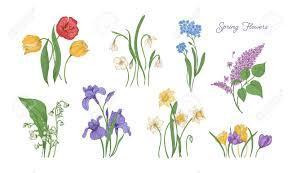 Find the best spring flowers background on getwallpapers. Bundle Of Natural Drawings Of Spring Flowers Tulip Lilac Stock Photo Picture And Royalty Free Image Image 112549301