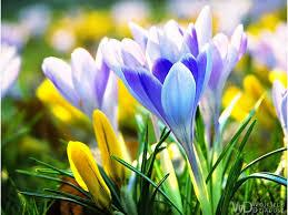 Spring flowers on green background. Early Spring Flowers Wallpapers Wallpaper Cave