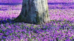 We still have more than 50,000 free photos and more than 200,000 pictures with effects, as well as backgrounds, textures, wallpaper, cards. Free Spring Flowers 2 Stock Photo Freeimages Com