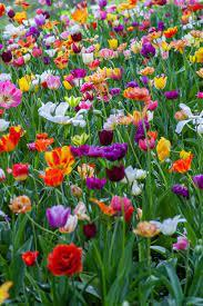 Collection of spring flowers (44). 500 Spring Flowers Pictures Download Free Images On Unsplash