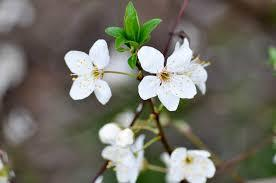 Learn about 15 colorful spring flowers and see beautiful images along with them. White Spring Flowers Free Image On 4 Free Photos