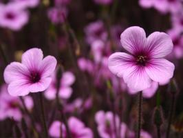 3d Flower Image Wallpapers For Free Download About 1 333 Wallpapers