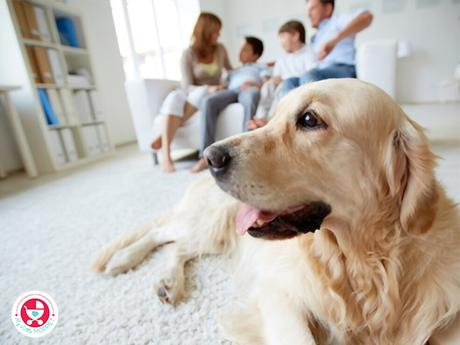 How to Choose the Right Pet for Your Child?