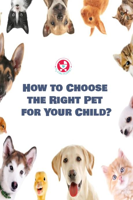 Are you considering to have a pet at home and yet to decide on it? Here is a complete guide on How to Choose the Right Pet for Your Child?