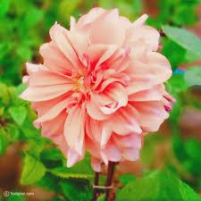 Background images flower nature will make your day amazing. Beautiful Flowers Images Free Download Flower Wallpaper Images