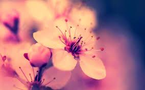 Good morning flowers images photo pictures hd. 37 Spring Flower Hd Wallpapers Wallpaperboat