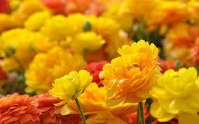 Free download new latest hd rose hd photo wallpaper under flowers category for high quality and high definition wide screen computer, pc and laptop desktop background photos, images and pictures. 40 Beautiful Flower Wallpapers For Your Desktop Beautiful Flowers Wallpapers Beautiful Flowers Hd Wallpapers Yellow Flower Wallpaper