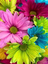 60,000+ vectors, stock photos & psd files. 90 000 Best Flower Wallpaper Photos 100 Free Download Pexels Stock Photos