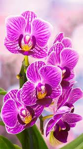You can explore in this category and download free flower background photos. Orchid Garden Wallpapers Top Free Orchid Garden Backgrounds Wallpaperaccess