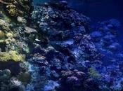 What Animals Great Barrier Reef?