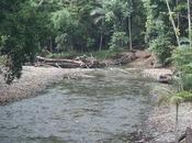Should Jungle Surf Within Daintree Rainforest