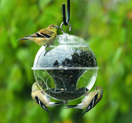 On wallpaperset you can find only the best hd wallpapers and background pictures. Walpepar Birds Wallpaper S 60