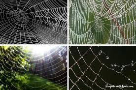 Website computer web design internet marketing laptop digital business. Make Colorful Watercolor Spider Web Art With Kids Projects With Kids