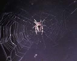 Or play free educational games? Spider Web Facts For Kids