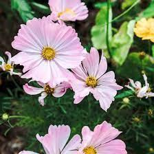 Find the flower names below, along with a brief description, a photo, and some guidance for those of you who are interested in gardening. 9 Best Flowers For The Vegetable Garden