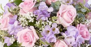 The good news is that insect pests may also avoid the scent. St Mellion Flowers Your Florist In Saltash Same Day Flower Delivery Available