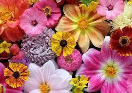 Most pictures taken on interior landscape accounts that i manage. National Flowers List Of National Flowers By Country
