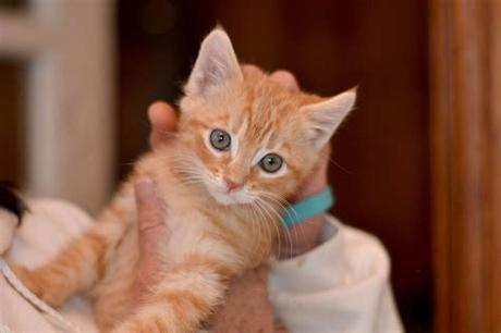 Choose from 10+ orange kitten graphic resources and download in the form of png, eps, ai or psd. Adopt A Pet For Free In Park Slope This Weekend