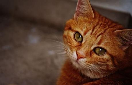 Kitties offer that perfect mix of charm and companionship, while still actually being fairly but there's something special about orange tabby cats that we find particularly charming. Orange Tabby Cat · Free Stock Photo