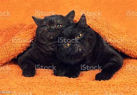 See more ideas about orange kittens, kittens, kitten. Free Orange Kittens