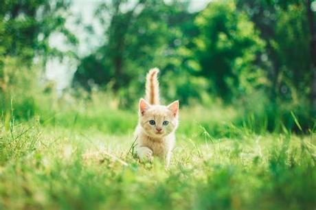 These 5 adorable kitten all need good homes. 100+ Kitten Images   Download Free Images on Unsplash