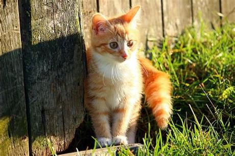 Use them in commercial designs under lifetime, perpetual & worldwide rights. Royalty-Free photo: Orange Tabby kitten beside grasses ...