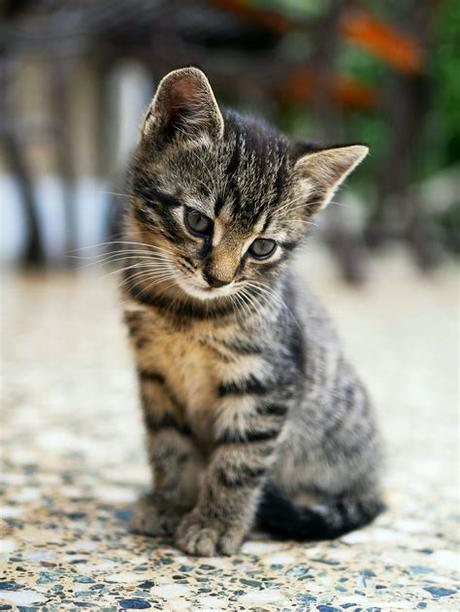 A year ago yesterday, we brought a tiny kitten home. 100+ Kitten Images   Download Free Images on Unsplash
