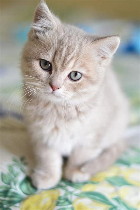 Collection by suzann ellyatt • last updated 11 weeks ago. Royalty-Free photo: Orange kitten in tilt-shift ...