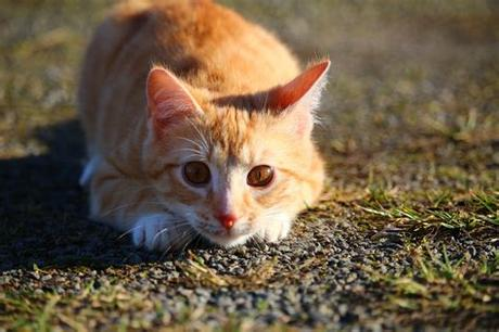 A year ago yesterday, we brought a tiny kitten home. orange tabby kitten free image   Peakpx