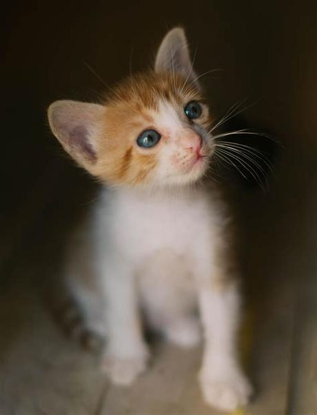 Collection by lathyon cats pets • last updated 4 days ago. White and Orange Kitten · Free Stock Photo