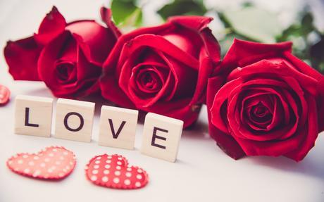 Wallpaper: Flower, Love, Red Flower, Rose - uBackground.com