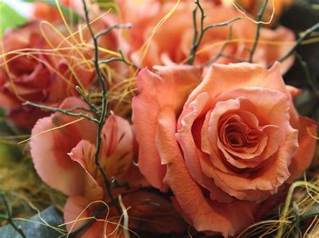 Available for hd, 4k, 5k desktops and mobile phones. Love Rose Flowers - Flower HD Wallpapers, Images, PIctures ...