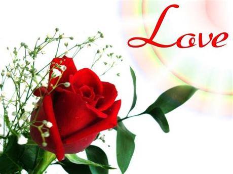 Beautiful rose flowers images and wallpapers hd pictures. Flower Love   loving-a-prophet