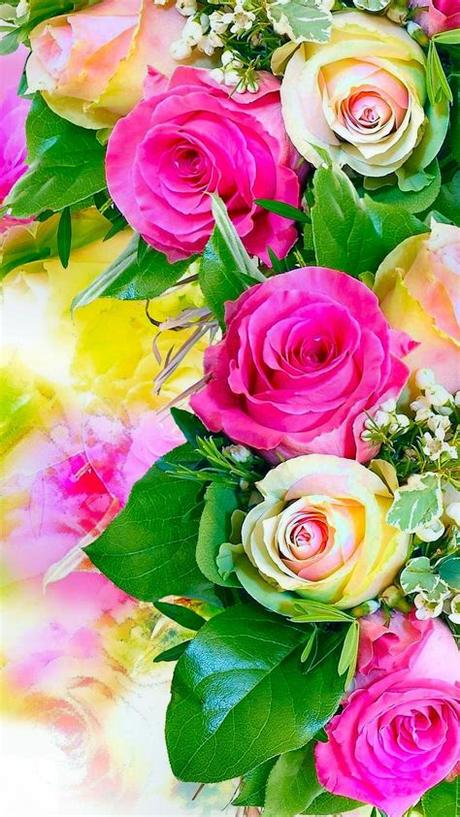 Sort by newest first hd picture rose flowers beautiful images new photo download beautiful natural image download hd flower pictures love image download banner background hd beautiful rose flowers hd beautiful scenery. Free download Rose Flower Wallpaper Hd Mobile Wallpapers ...