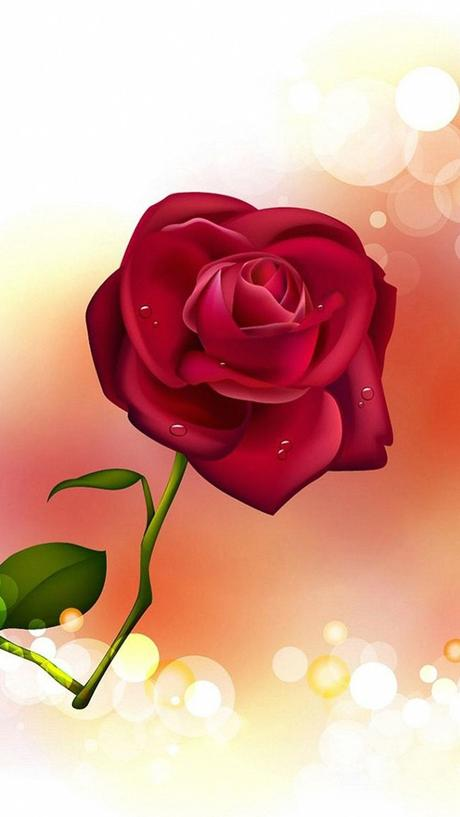 HD Rose Wallpapers For Mobile - WallpaperPulse   Rose ...