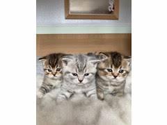Lladro little riders boy cat kitten skateboard 7623 nib 1994 $180 (van nuys). Cute Kittens For Sale Free June 2021