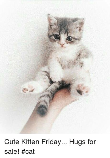 Cute Kitten Friday Hugs For Sale Cat Cute Meme On Me Me