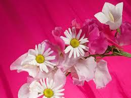 Free 3d flower models available for download. Beautiful Flowers Wallpapers Free Download Group 74