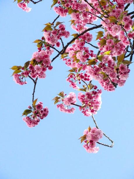 100 000 Best Beautiful Flowers Photos 100 Free Download Pexels Stock Photos