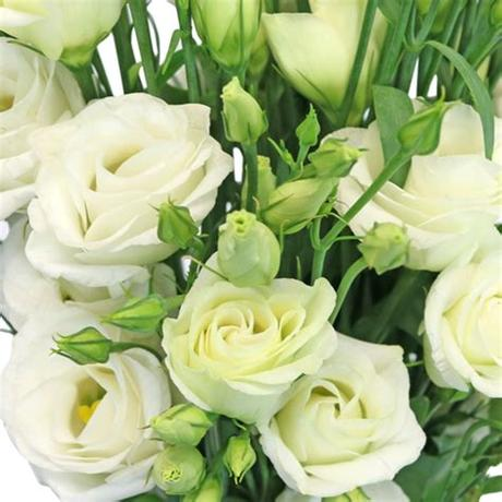 White pink flowers in the green grass fields with the sun shining. Wholesale Miniature White Lisianthus Flowers   FiftyFlowers