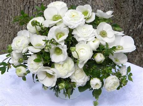 White flowers for weddings and special events are available year around. Wedding Flowers from Springwell: Elegant White Ranunculus ...