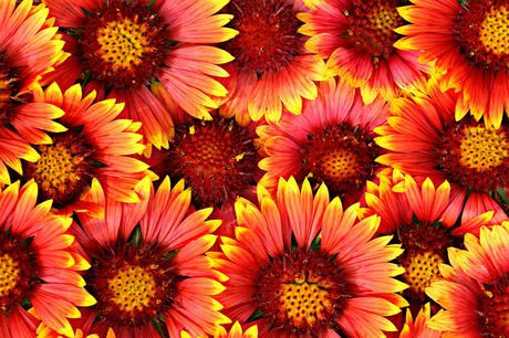 Free photo: Flowers background - Abstract, Sunshine ...