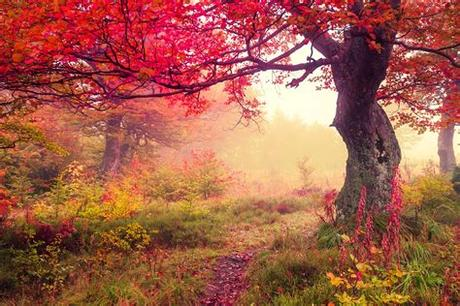 The site also includes christmas backgrounds, halloween and even saint patrick's day background. Autumn Wallpapers Images Photos Pictures Backgrounds